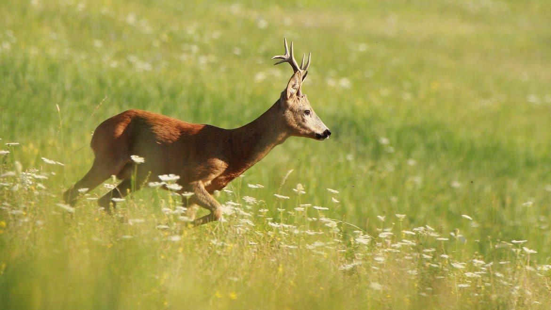 Rescue wildlife during harvest