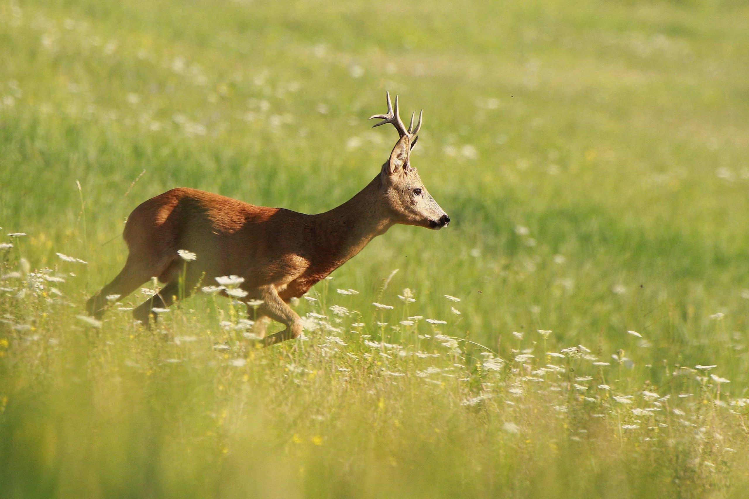 Rettung Wildtiere bei der Ernte
